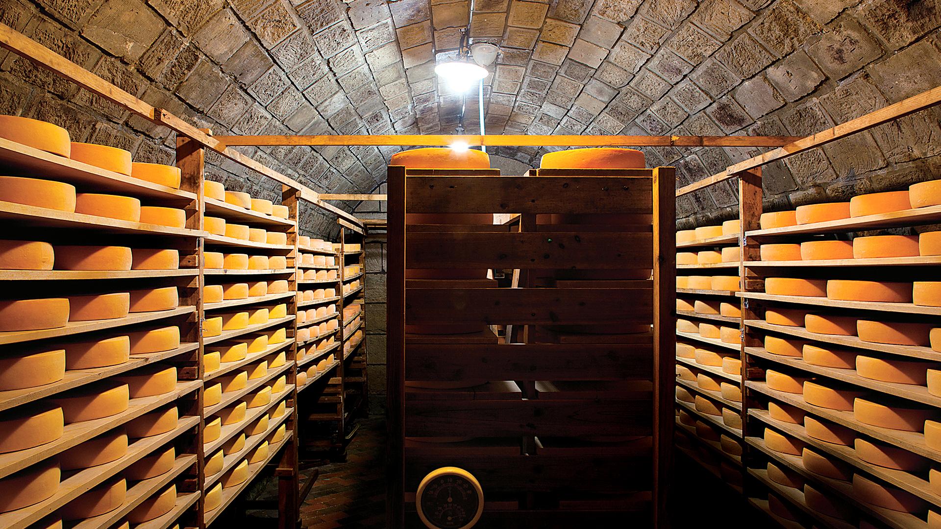ひとつひとつのいのちが輝くチーズ <br />〜共働学舎新得農場〜