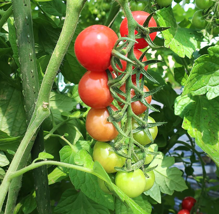 夏本番! ぐっと広がる収穫体験のラインナップ!