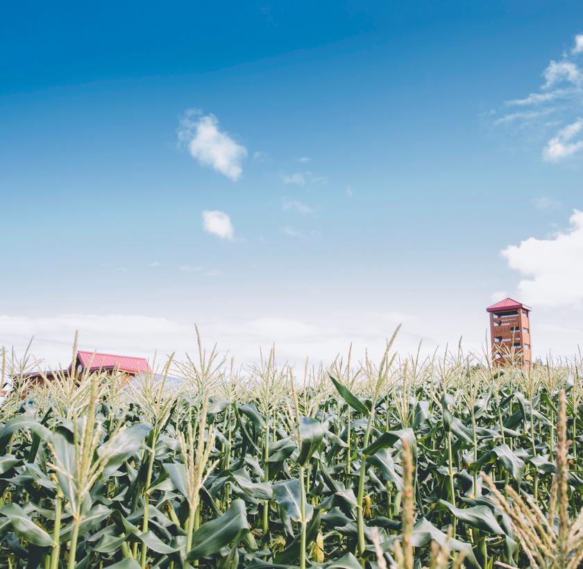 「くるるの杜」は実りの季節収穫体験にチャレンジ!