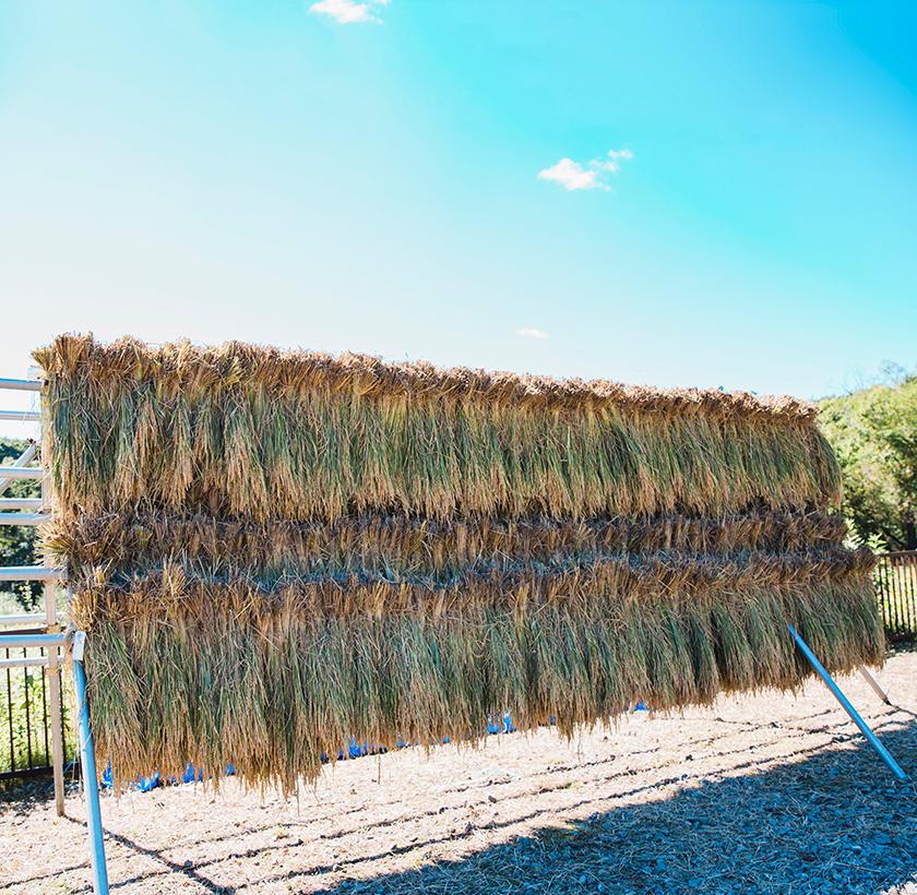 刈った稲は「はさかけ」へ。日光浴でおいしくな〜れ