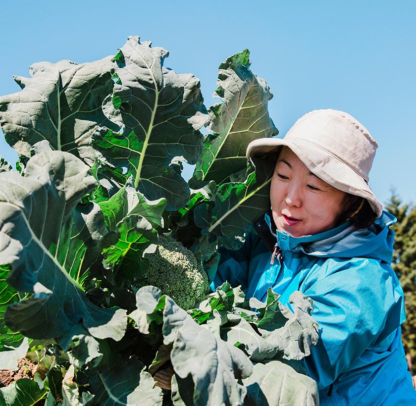 それぞれの採り方を習い畑で4種類の野菜を収穫