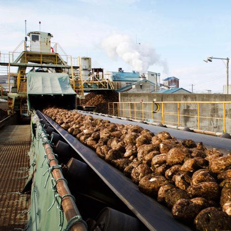 てん菜から砂糖へ/ホクレン清水製糖工場② (清水町)