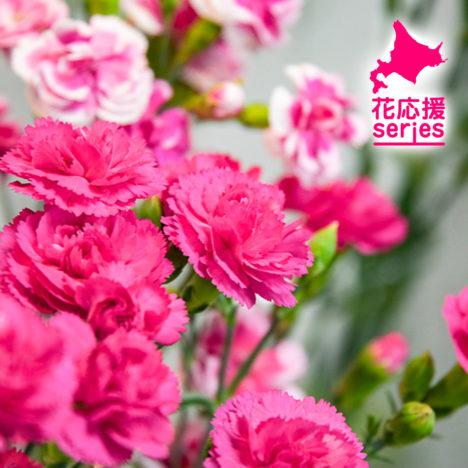 vol.13 「北海道育ちの花」篇
