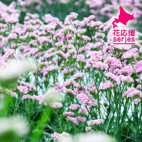 空間を彩る道産の花たち /JA北空知広域連(北育ち元気村花き生産組合)