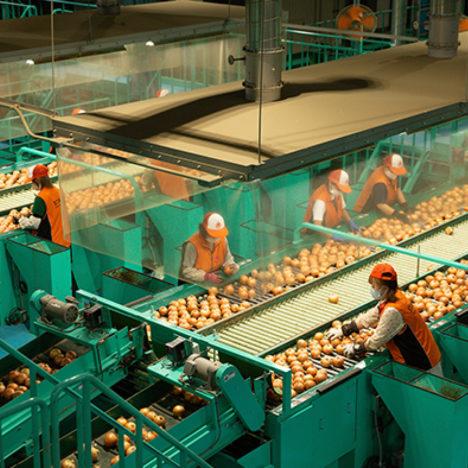 日本一の玉ねぎ産地の集出荷施設/JAきたみらい(北見市)