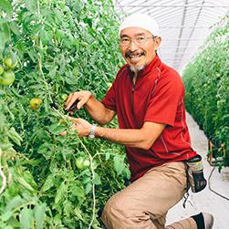 農家の時計/JA北はるか『フルーツトマト』