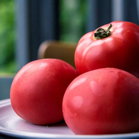 Vol.22 北海道産トマト