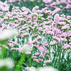 北海道NOW/空間を彩る道産の花たち